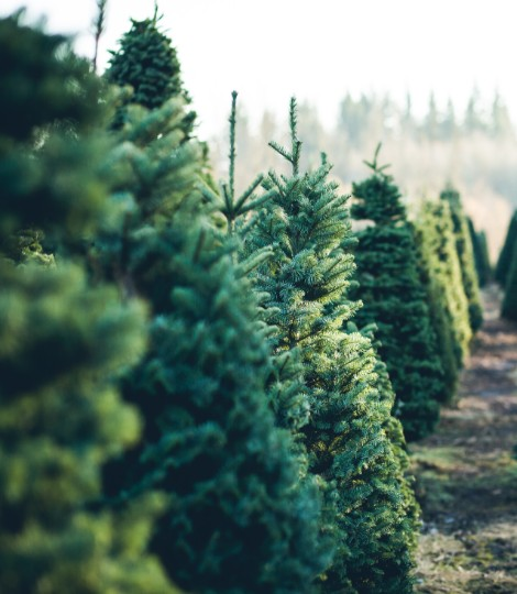 Christmas Trees and Logs